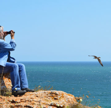 A traveler takes video of gulls from his rocky perch on the shore.